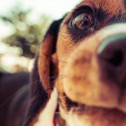Terapija s pomočjo psa - prostovoljstvo